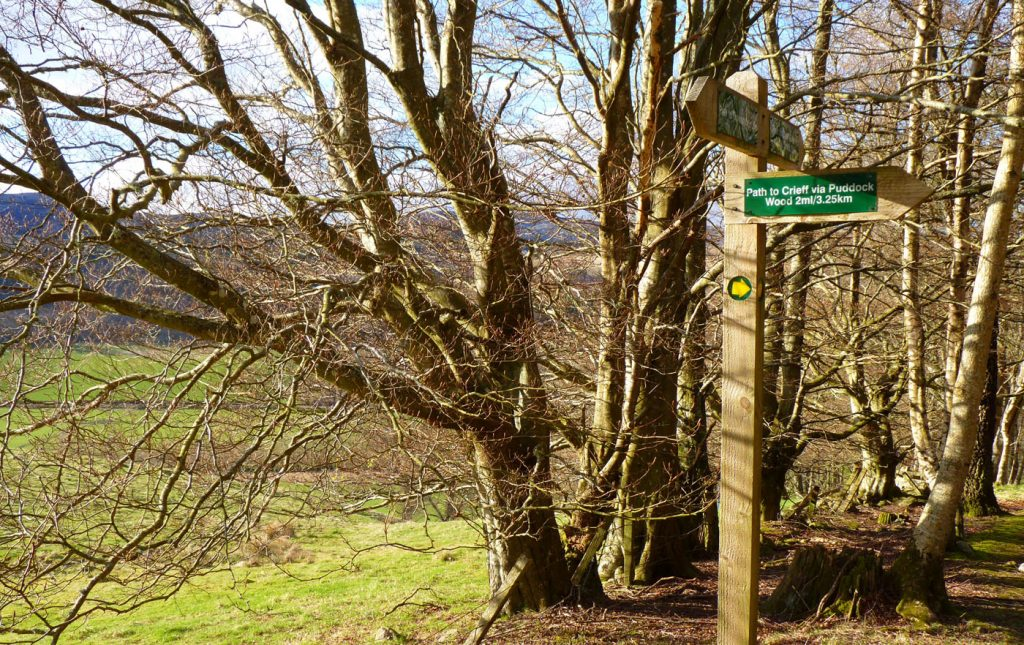 Signposted Path Network around Crieff
